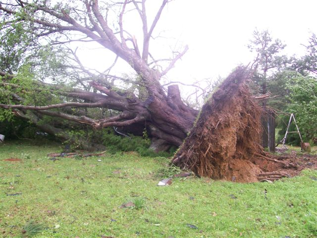 Large tree pushed over, taking large chunk of ground with its roots.